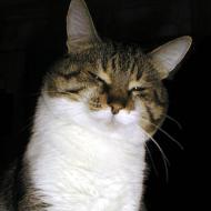 Catcatcat